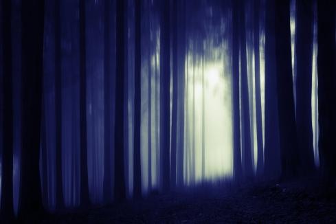 wood-1118468_1920(1)